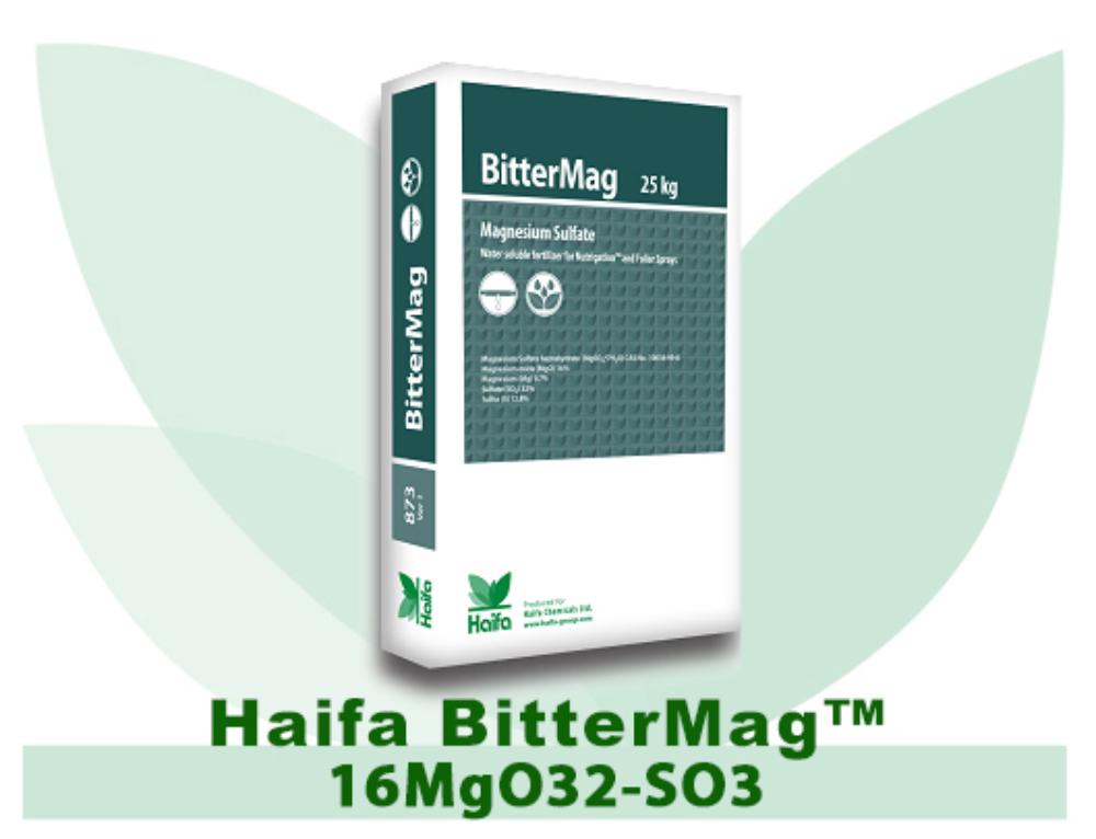 Haifa BitterMag